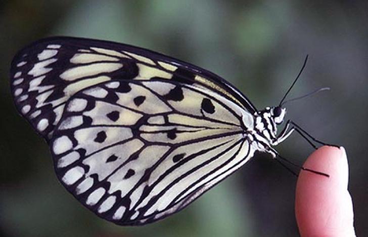 Neue Behandlungsmöglichkeit für Schmetterlingskinder